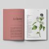 Fiche botanique : Le lierre